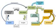 economy cycle